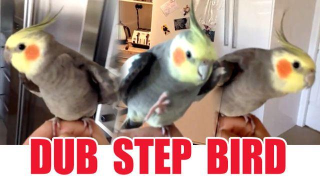 CRAKDdubstepbird